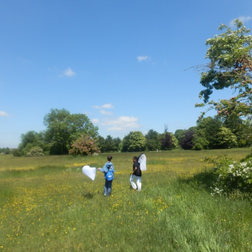 Minibeasts-on-the-Downs4-Jun13